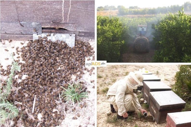 Conservación abejas