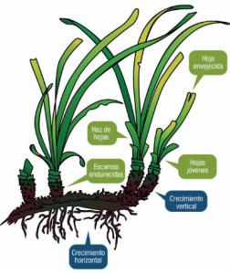 Guía didáctica sobre las praderas de Posidonia oceanica