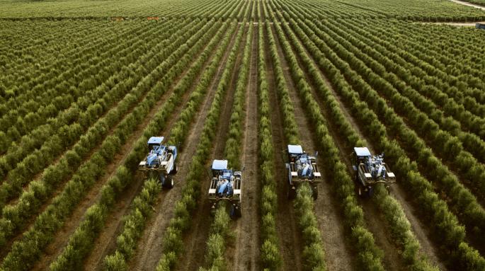 Problemas ambientales del olivar superintensivo